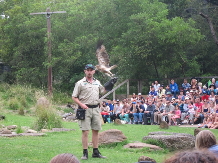 """Spirits of the Sky"" birds show!"