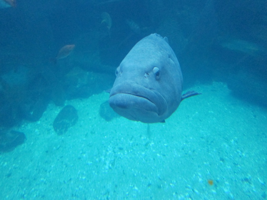 This is a grumpy fish alright.