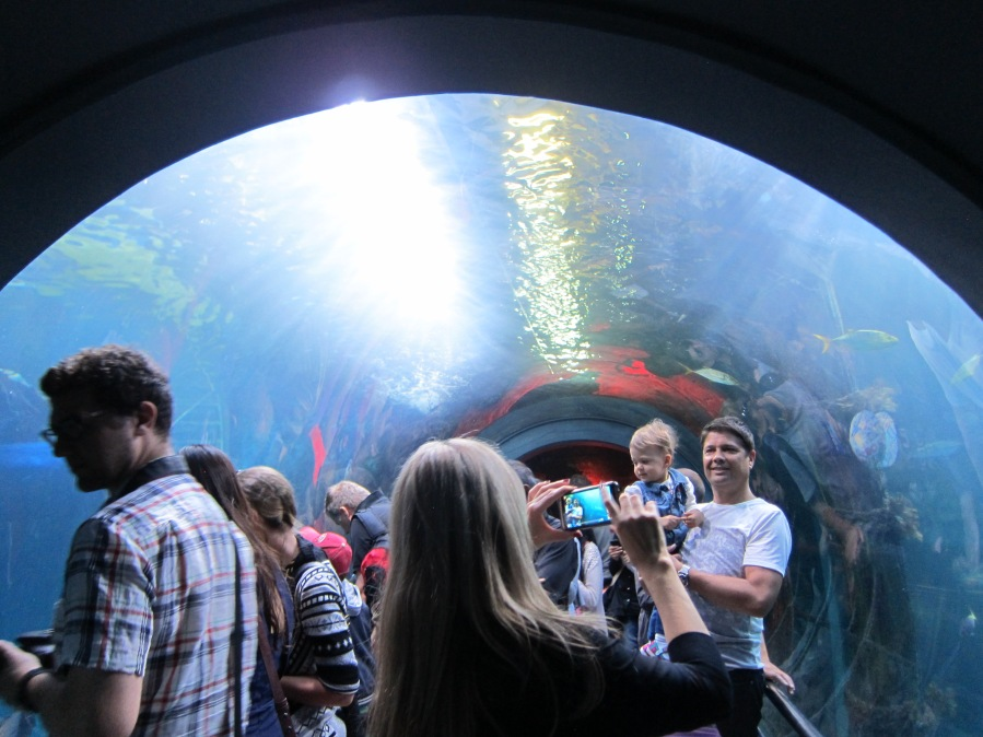 Underwater tube! Spent forever here looking at the marine animals.