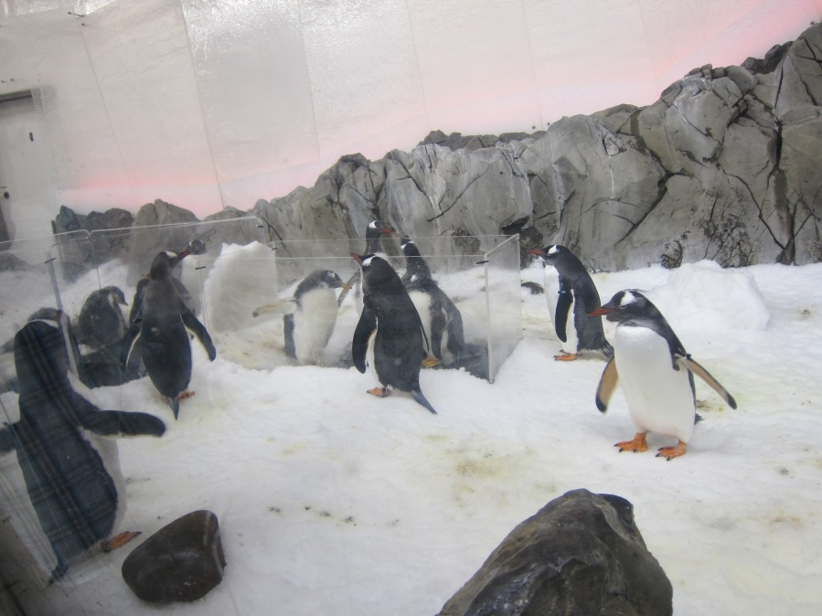 In the center of the exhibit is a little area for the penguin chicks to be able to get used to dat penguin lyfe from a safe environment.